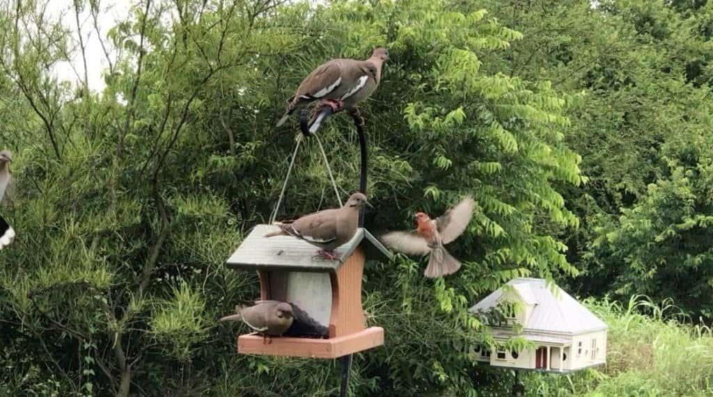 mitchell-lake-audubon-center-birdinging-in-south-san-antonio-1024x571-5723467