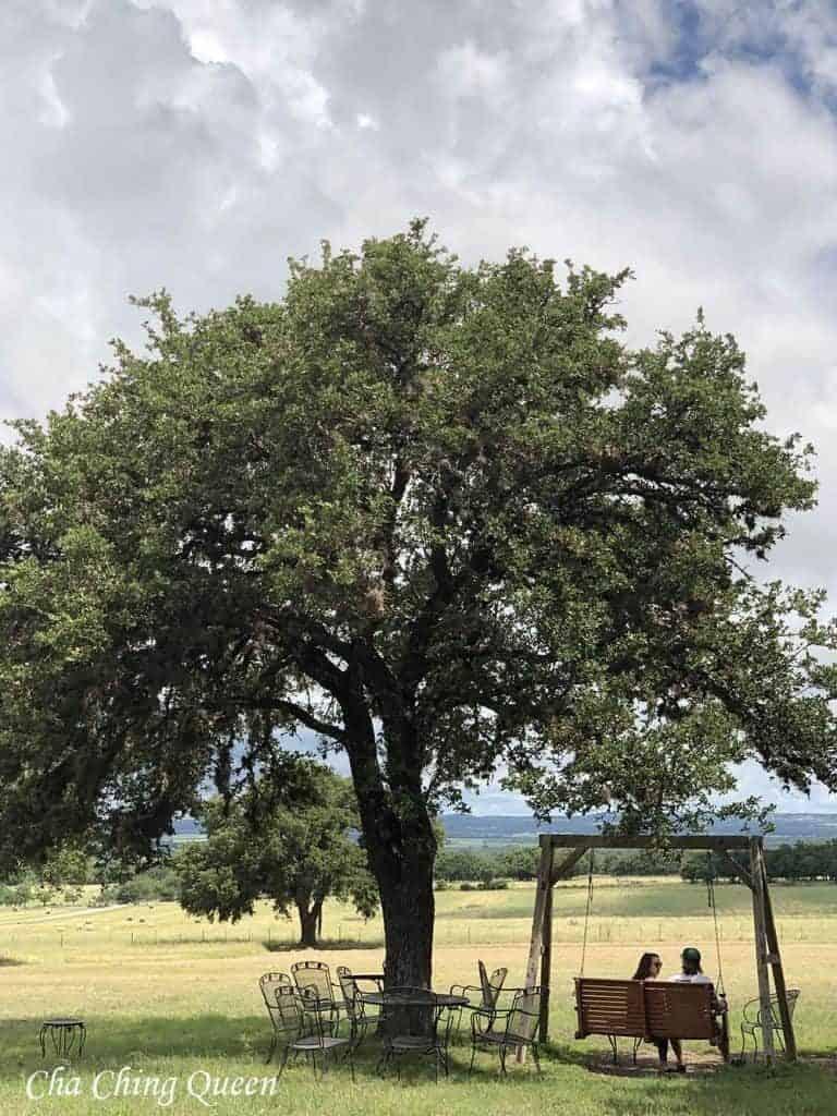 pedernales-cellars-texas-wine-country-768x1024-5624676